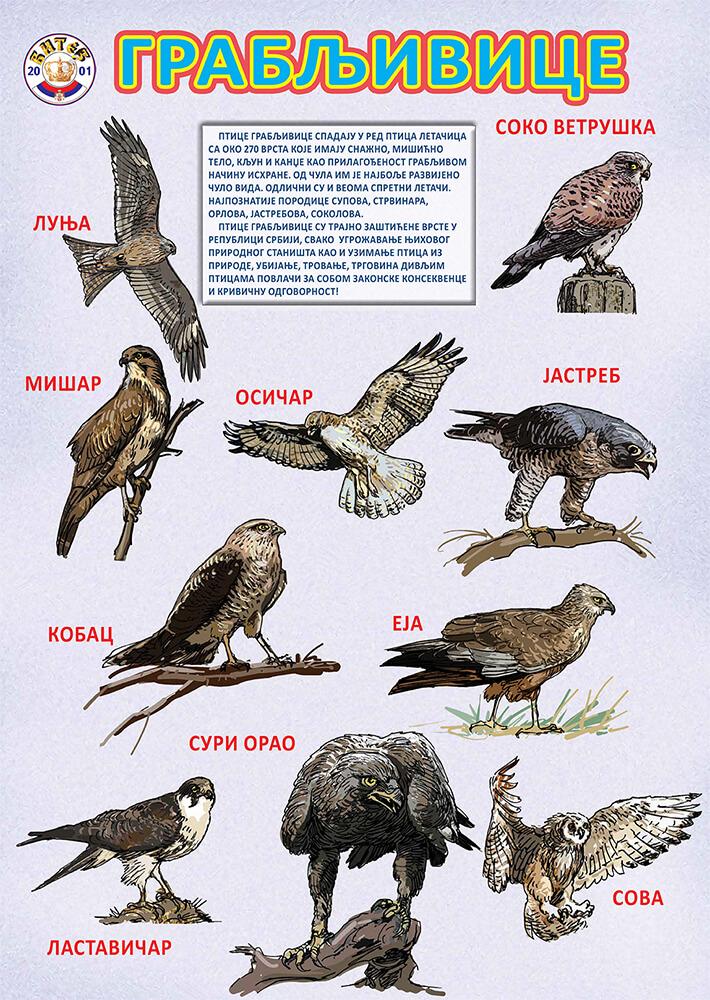 Ptice grabljivice